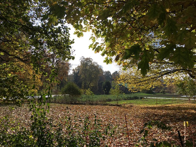 I walked along the garden on a sunny but cold day while the first leaves were falling.